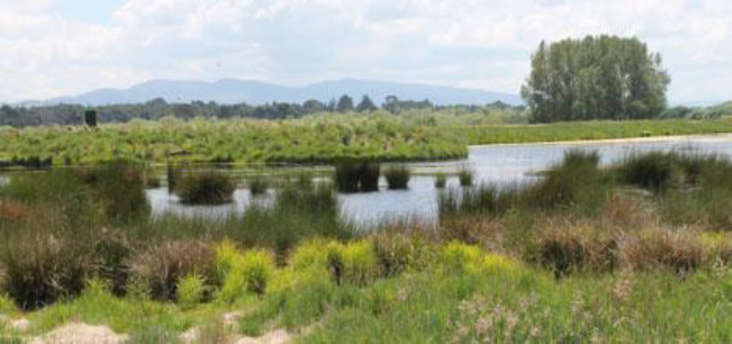 Ohaaki Wetland Project